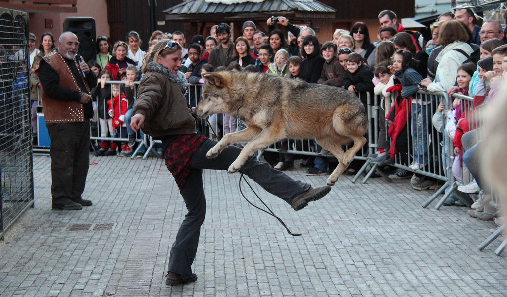 Wolf dancing